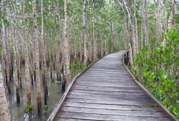 Episode 6: Cairns Airport Mangrove Wetlands – World Wetlands Day 2019