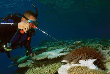 Nitrogen & the Great Barrier Reef