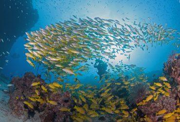 Seeking EOI's – Wet Tropics Waterways Independent Chair