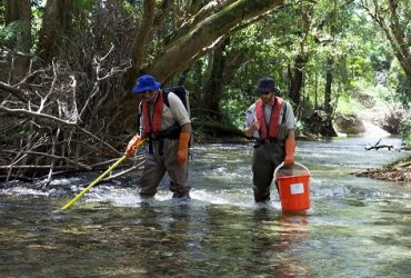Electrofishing: Scientists Gather More Fish Data