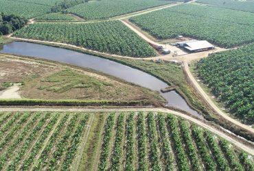 Season 2 Episode 5: Suzette Argent on Constructed Wetlands