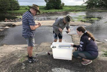 Palm Creek Fish Surveys Show Positive Results